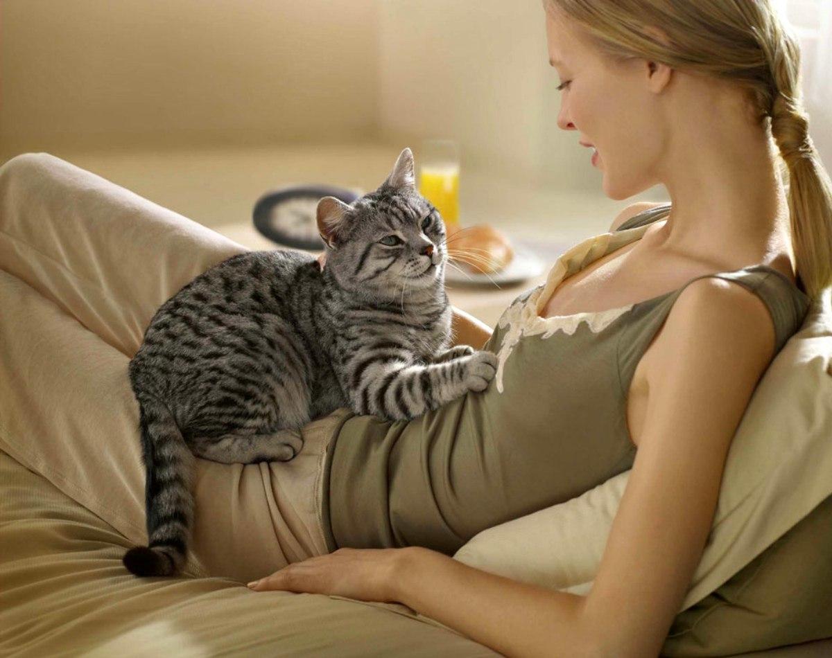 Инсульт у котов и кошек. Микроинсульт у кошек: разбираемся в ...
