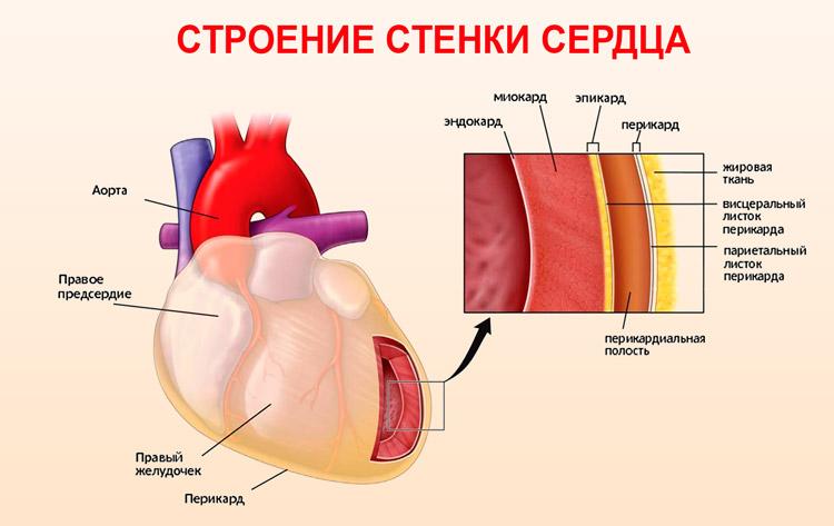 Екает сердце причины. Диагностика, лечение и профилактика ...