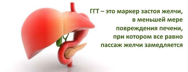 Анализ крови гамма гт повышен что это значит