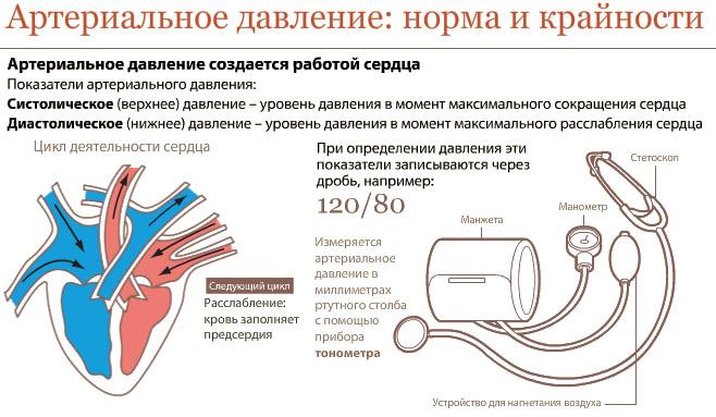 Bir kişinin arteriyel basıncı ve nabzı - norm nedir