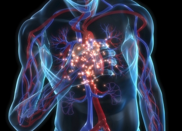 Вертикальная позиция сердца